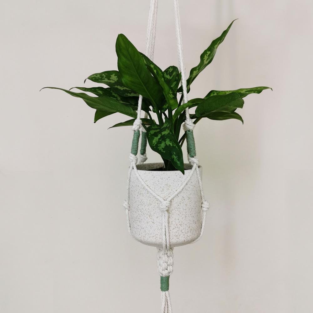 Knotty thing macrame plant hanger